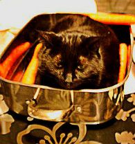 Cat in Pan