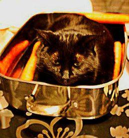 Cat in Pan