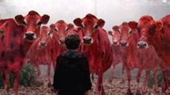Man vs Cows