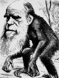 darwin-monkey-2